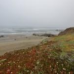CA Coast 015 (1280x840)