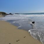 CA Coast 193 (1280x731)