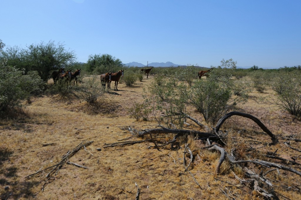 Fort McDowell Campground (6)