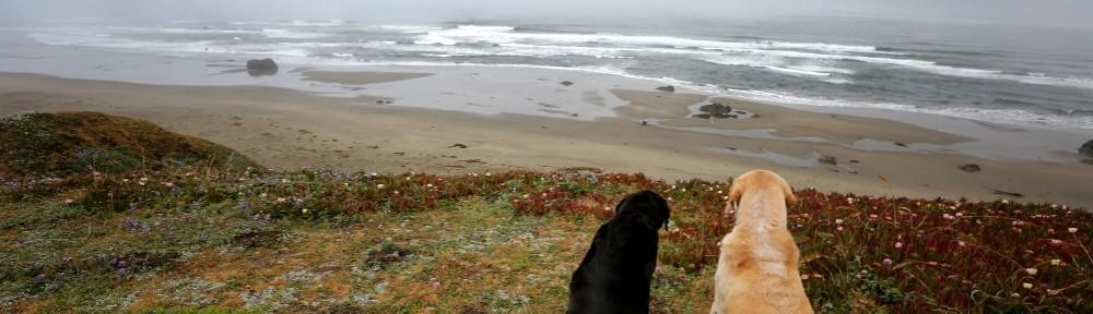 Max & Chloe's Alaska Adventure
