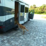 Max  hops in the RV, as always, ready for anything.