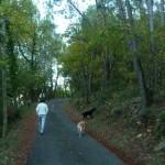 Dog Walk 009