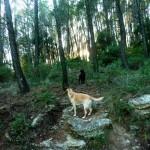 Dog Walk 015