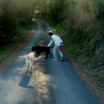 Dog Walk 024