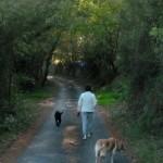 Dog Walk 025
