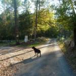 Dog Walk 029