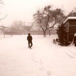 Snow Dogs 028