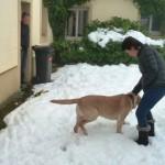 Snow Dogs 058