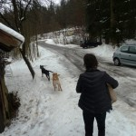 To Luxembourg - Dogs 071